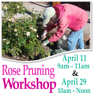 ROSE PRUNING In the Railyard Park @ Railyard Park | Santa Fe | New Mexico | United States
